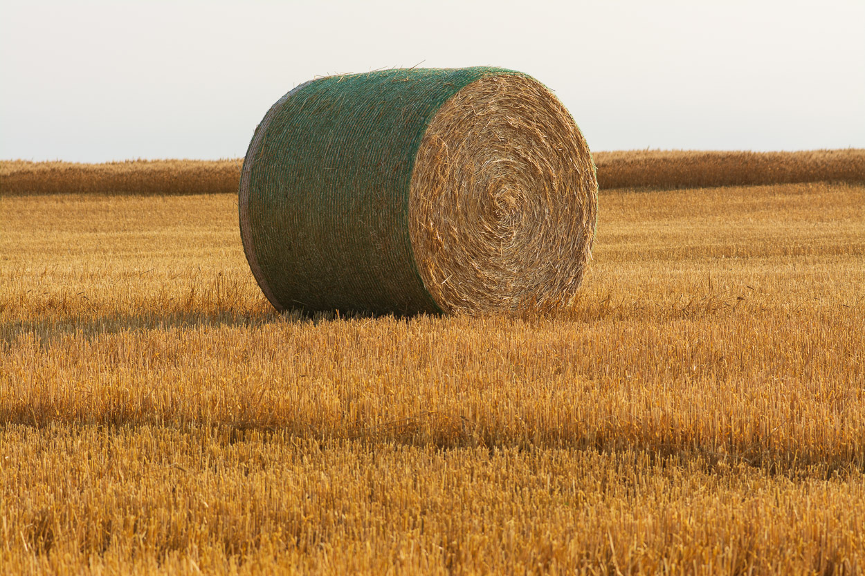 Hay Bale Link to Love This Land